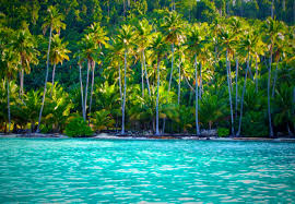 tropical island paradise beach view summer palms islands togian indonesia morning forest