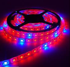 red and blue led grow lights 5m grow light 12v led strip smd 5050 red blue 5 1 greenhouse
