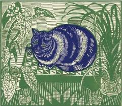 bichon frise z hter hessen 120 best animals images on pinterest