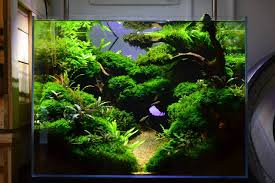 australian native aquatic plants favourites display tank at exotic aquatic amazing scenery so