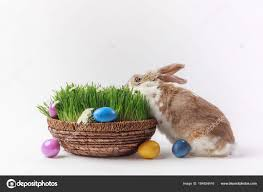 easter basket bunny view rabbit easter basket grass painted eggs easter concept