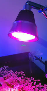 best led refugium light refugium algae growing led light myaquariumshop online store