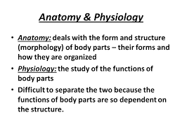 What Is Human Anatomy And Physiology 1 Introduction To Human Anatomy And Physiology Chapter 1 Ppt Video