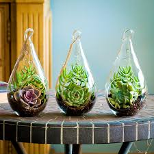terrarium kits for your home or office webnuggetz com