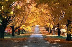 5 places fall foliage oklahoma