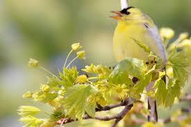 attracting birds plants that attract birds trees that attract birds