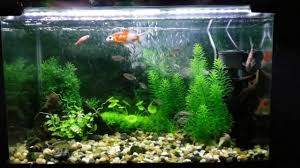 aquarium decorated with natural looking artificial plants youtube