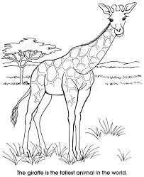 218 coloring animals images drawings coloring
