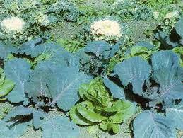 edible landscaping organic gardening earth news