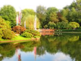 St Louis Botanical Garden Hours Koi Feeding Bridge At The Japanese Garden Pond Picture Of