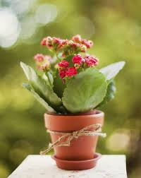 best houseplant gifts tips for indoor plant sharing with others