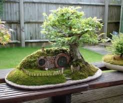 how to decorate your home with bonsai trees