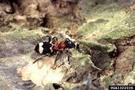 forest pest insects in north america a photographic guide