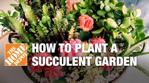 How To Make A Succulent Planter by Succulent Container Gardens Tips And Tricks Youtube