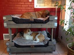 Doggie Bunk Beds Easy Diy Pet Bunk Beds Dogs Pinterest Bunk Bed Easy And