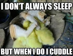 Cuddle Meme - cuddle memes lovequotesmessages