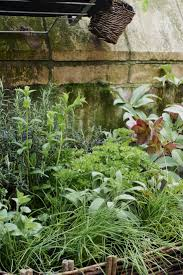 kitchen herb garden includes mint chives rosemary beetroot
