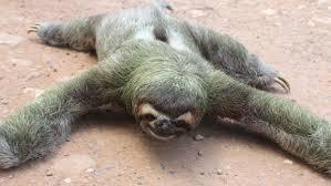 Sloth Whisper Meme - sloth meme whisper dragon