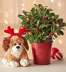 Christmas Flowers The Most Popular Christmas Flowers To Decorate With Petal Talk