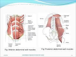 Picture Of Abdomen Anatomy Abdomen Radiography