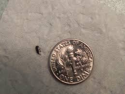 Tiny Brown Bug In Bathroom Inspirations Small Bugs In Bathroom Tiny Brown Bug