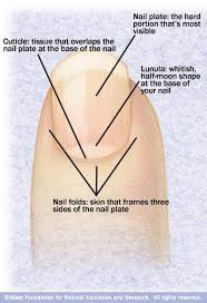 nails how to keep your fingernails healthy and strong healthy