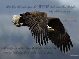 meaning of eagles in the bible insights i learned from the bible
