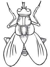 coloring pages insects bugs bug coloring pages free printable for kids throughout ribsvigyapan