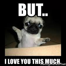 I Love You This Much Meme - but i love you this much confused pug meme generator