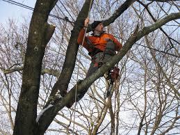 tree work tree services fairfield weston ct