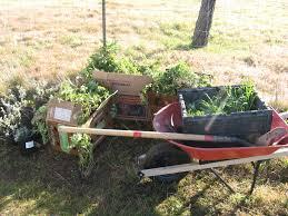 planting a native hedge sunol agpark hedgerow development sage