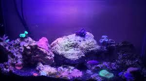 sb reef lights review sb reef lights sbox sprite nano reef and fuge lights youtube
