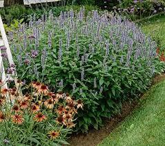 150 best mid south gardening sun images on pinterest flower