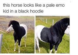 Emo Meme - emo horse funny memes