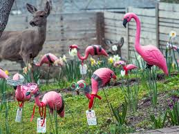 aiff pink flamingo lawn ornaments and a deer friend ashland daily