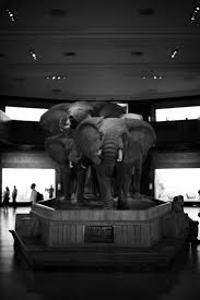 the 25 best natural history musuem ideas on pinterest natural