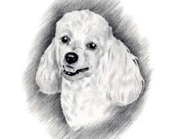 toy poodle coloring free printable coloring pages clip