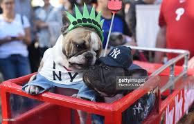 halloween costumes to inspire your dogs photo album getty images