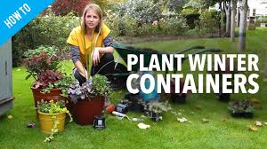 how to plant winter container gardens youtube