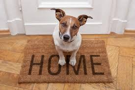 Happy In Your Home How To Keep A Dog Happy In Your Apartment The Village Apartments