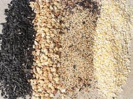 feeders and feeding orioles bird watcher u0027s digest