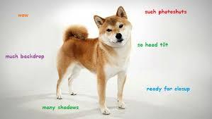 Such Meme - wow such photoshuts much backdrop so head tilt doge meme picsmine