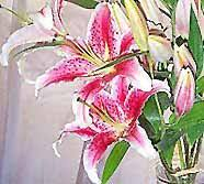 Tropical Flowers And Plants - exotic flowers the flower expert flowers encyclopedia