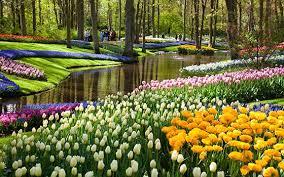 visit the keukenhof the largest flower garden in the world