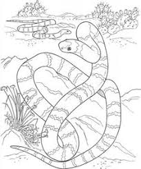 realistic animal coloring pages cute baby animal coloring pages wild animal coloring pages