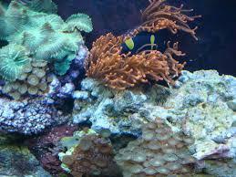 paradise shores aquarium home