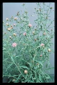 texas native plants list washington state noxious weed control board