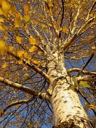 worst trees for your yard best trees to plant