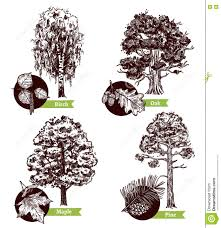 sketch tree leaves design concept stock vector image 78998883