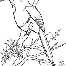 quetzal bird coloring kids drawing coloring pages